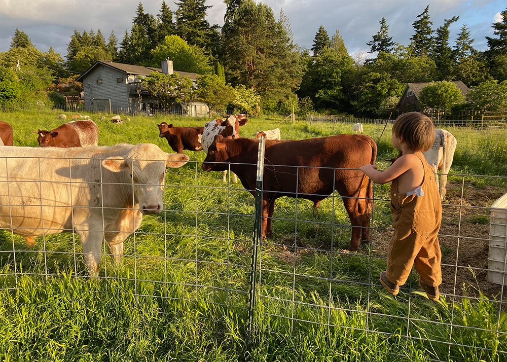 Roman inspecting the cows