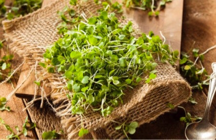 Microgreens & Vegetables