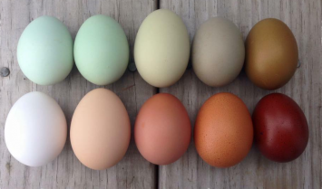 Eggs - 1 Dozen