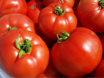 Tomatoes Red slicing
