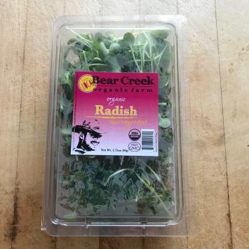 Micro green Radish