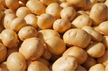 Organic Potatoes - 3 lb bag