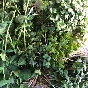Market Mix Micro Greens