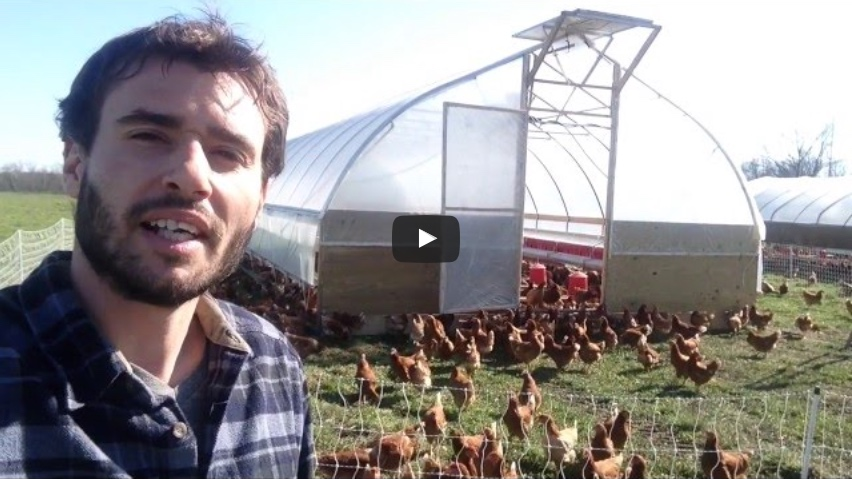 2,000 Hens Moved to Spring Pastures