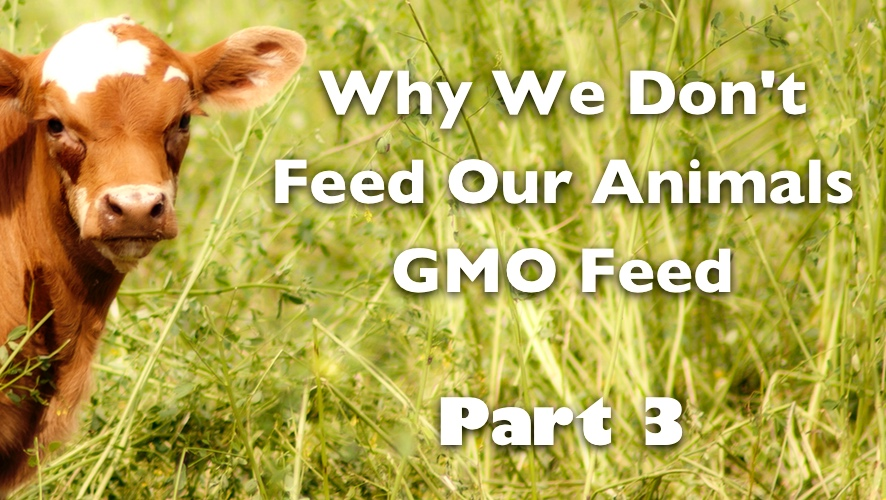 Why We Don't Feed Our Animals GMO Feed - Part 3