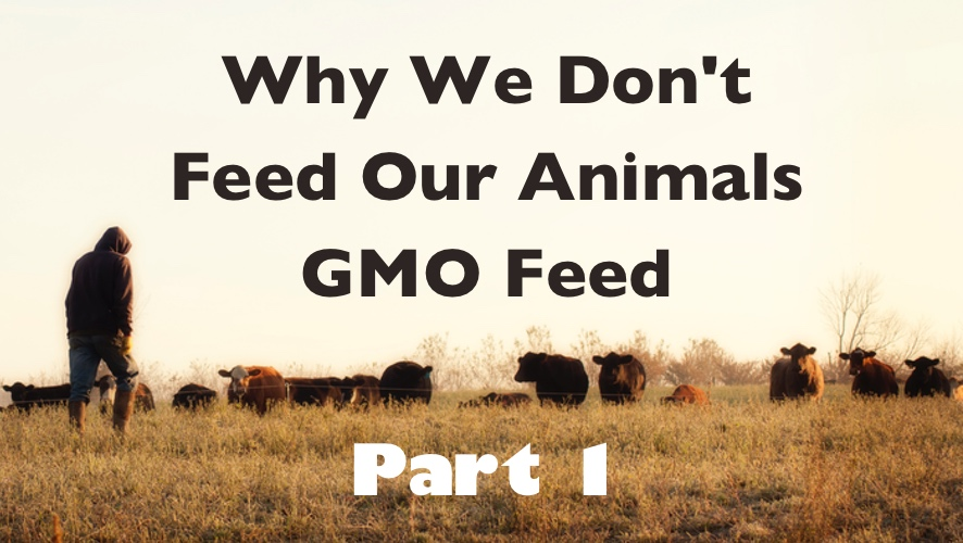 Why We Don't Feed Our Animals GMO Feed - Part 1