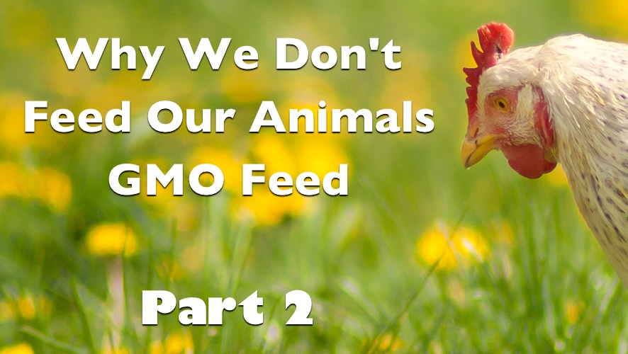Why We Don't Feed Our Animals GMO Feed - Part 2