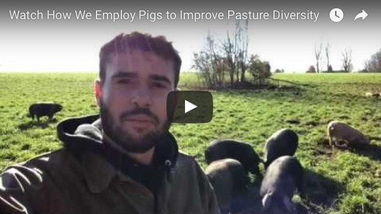 Watch How We Employ Pigs to Improve Pasture Diversity
