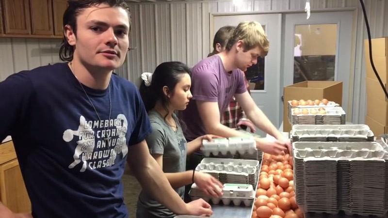 How We Clean 5,000 Eggs per Hour