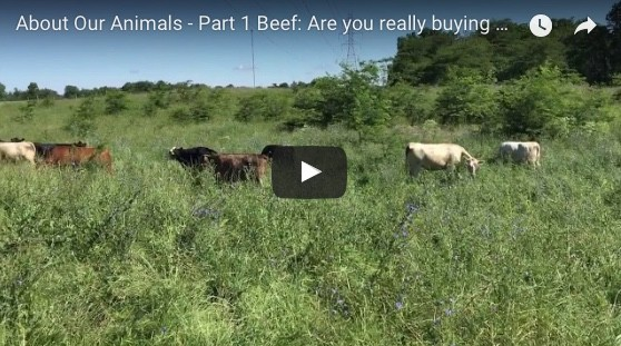 How We Raise Our Cattle... (And how to avoid phony grassfed beef!)