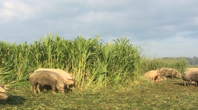 Purposeful Pig Production