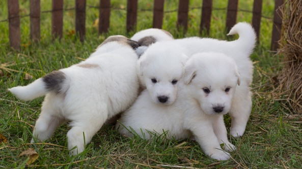 Puppies-Arrive-At-Seven-Sons.jpg