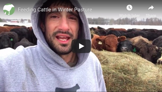 Winter Cattle Update with Blake