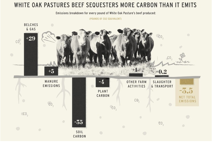 beef-net-carbon-effect-image.png