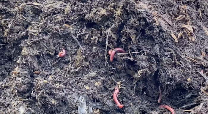 compost-pile-image.png