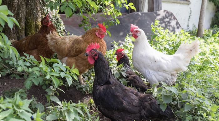 farm-life-show-regenerative-farming.png