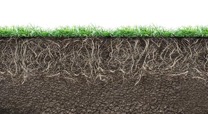 regenerative-farming-root-health.png