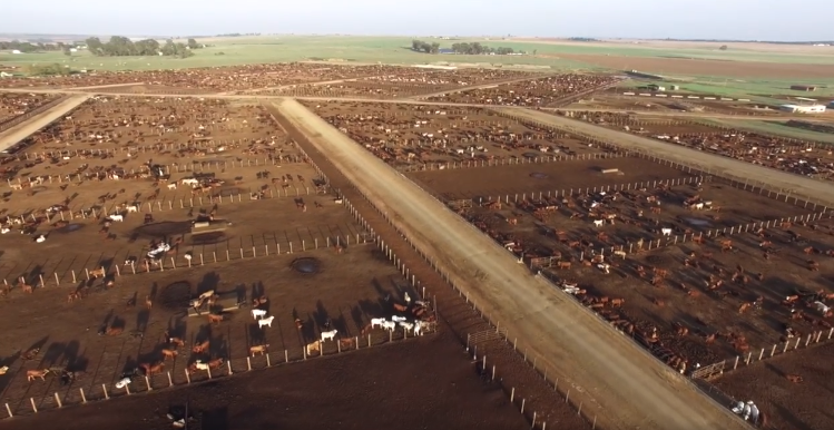 feedlot-picture.png