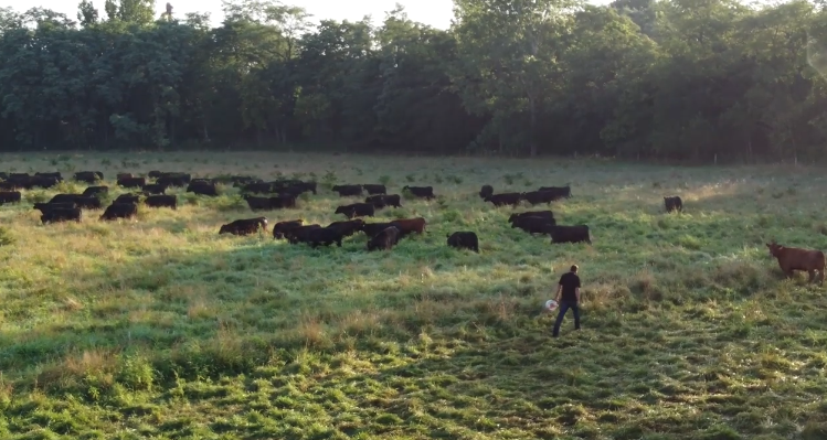 image-of-grazine-cows.png