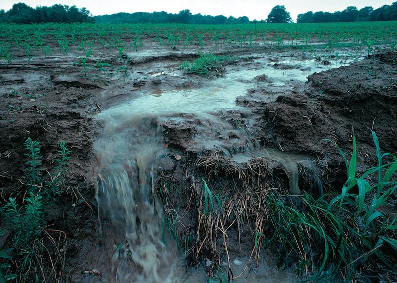 Runoff_of_soil_&_fertilizer.jpg