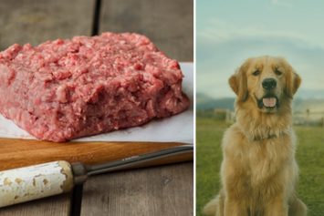 10 PK | 100% Grassfed PET Grind (Perfect Treat or Topper)