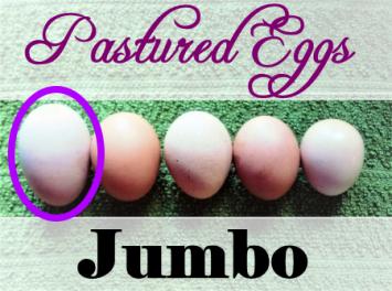 Eggs (Jumbo)
