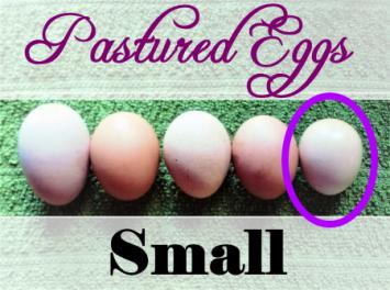 Eggs (Small)