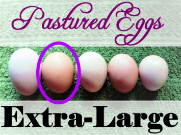 Eggs (Extra-Large, Bundle Price)