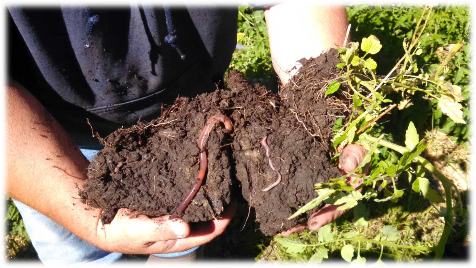 how-we-help-soil-soft-2.jpg
