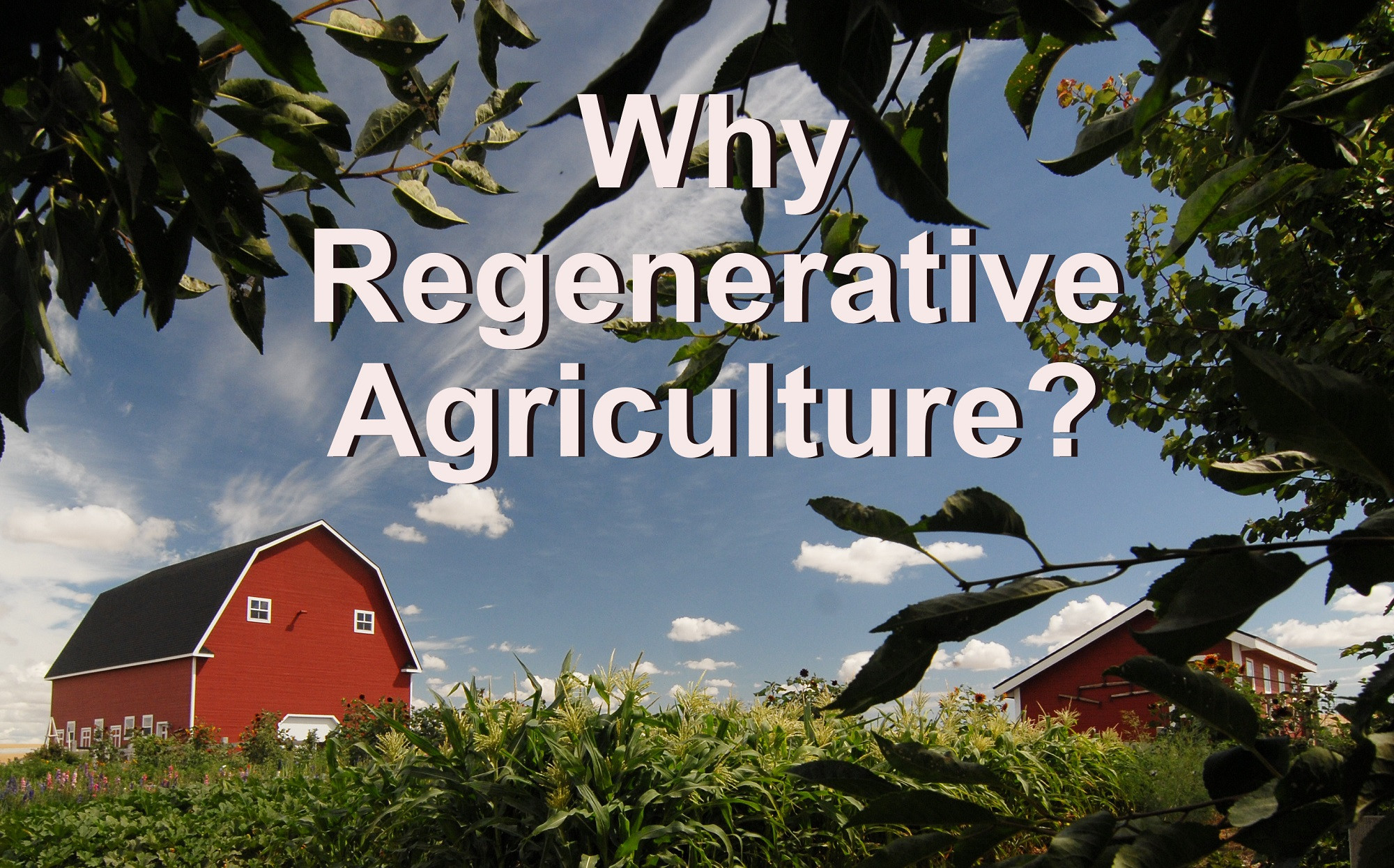 Why Regenerative Agriculture?