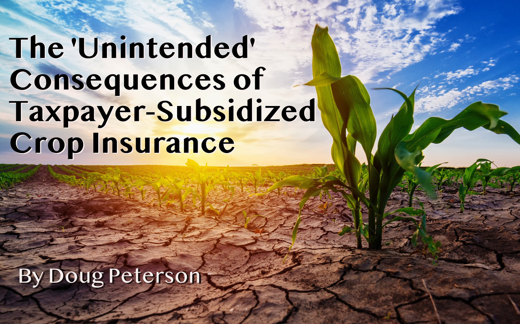 The 'Unintended' Consequences of Taxpayer-Subsidized Crop Insurance