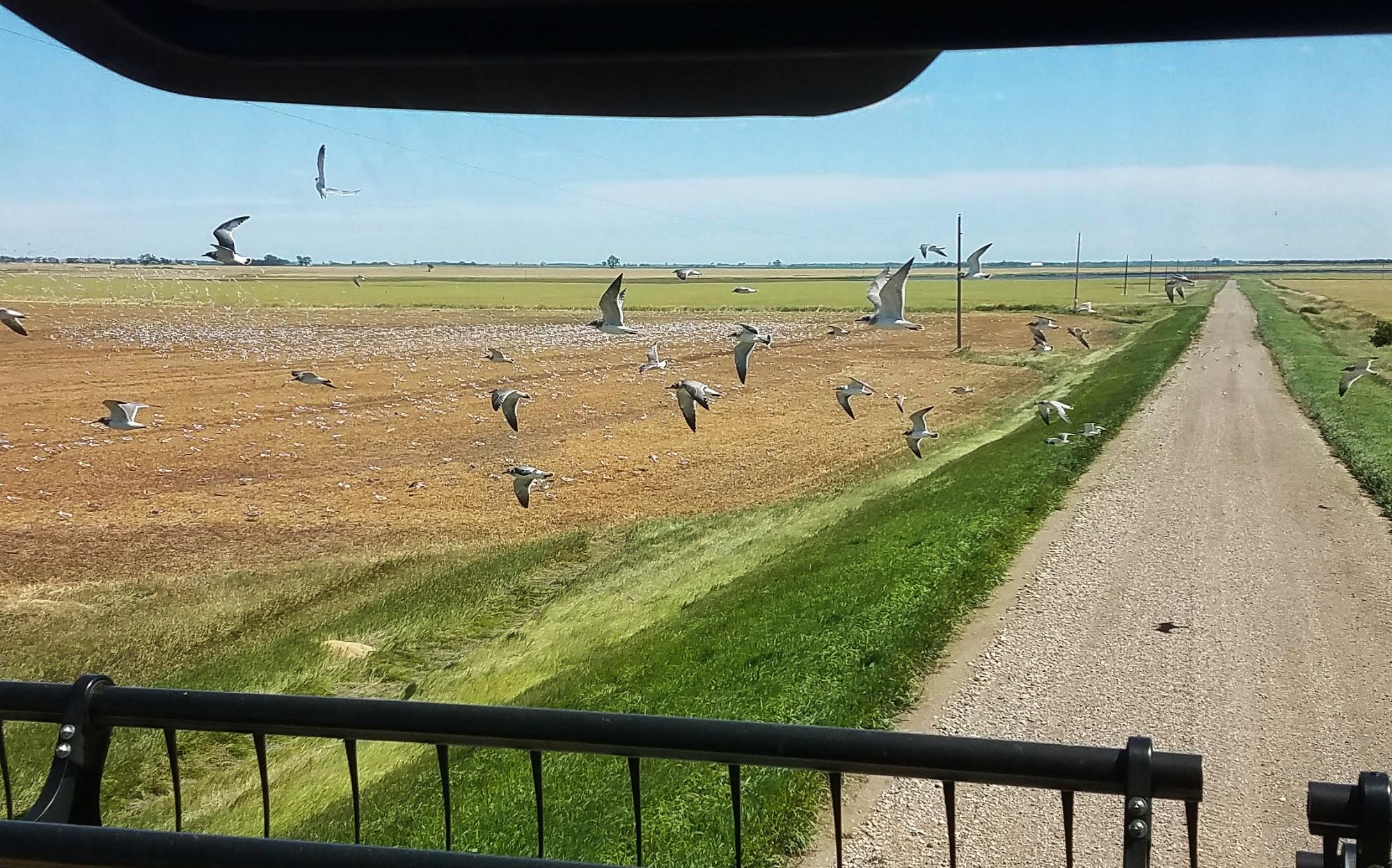 Seagull_Harvest.jpg