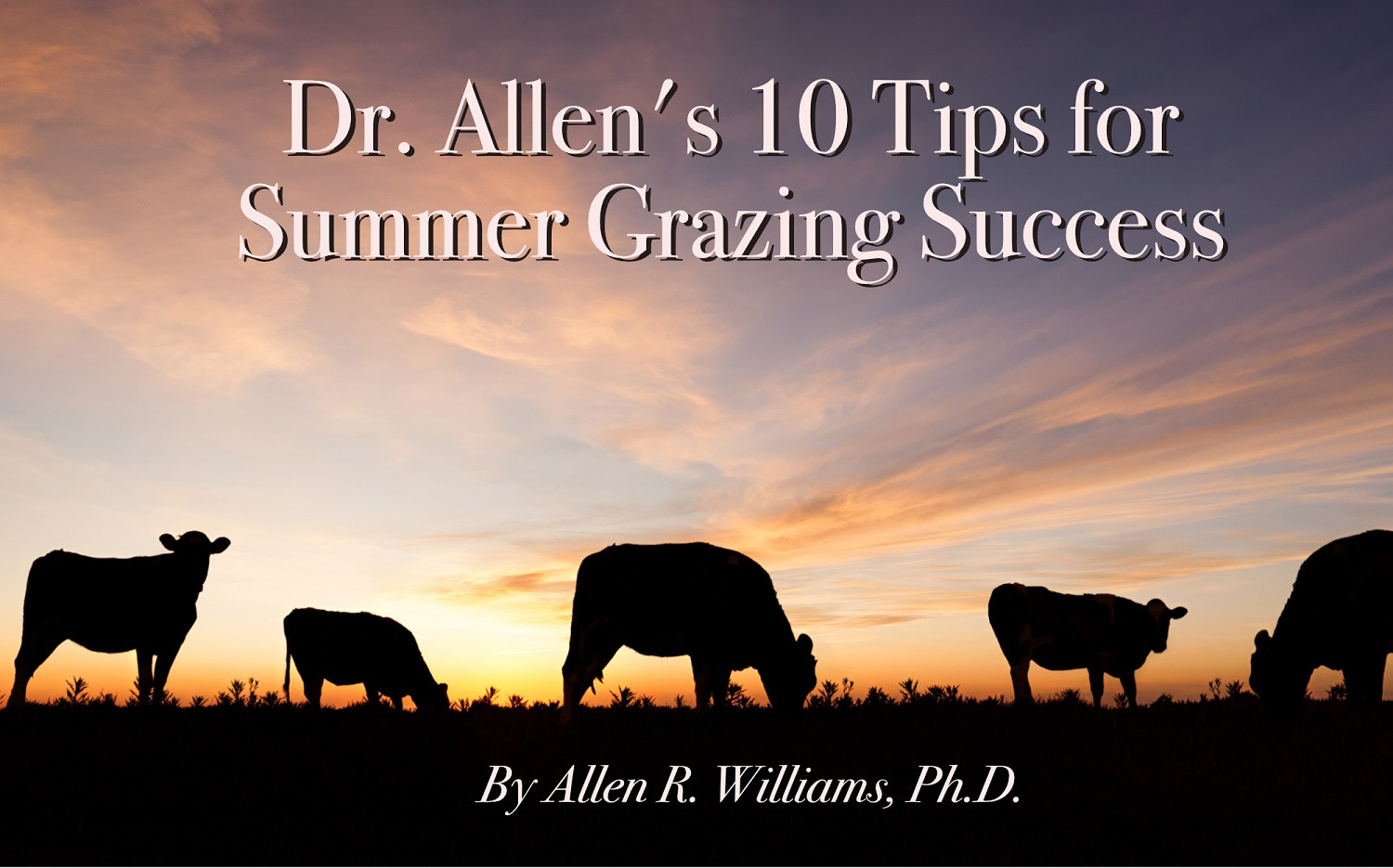 Dr. Allen's 10 Tips for Summer Grazing Success