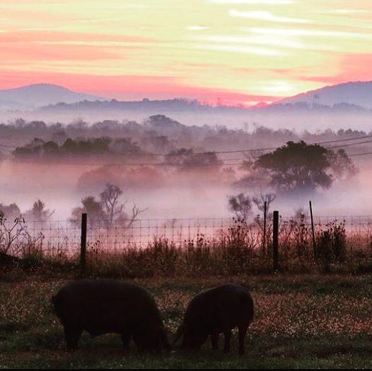 Spring House Farm Milestones for 2020