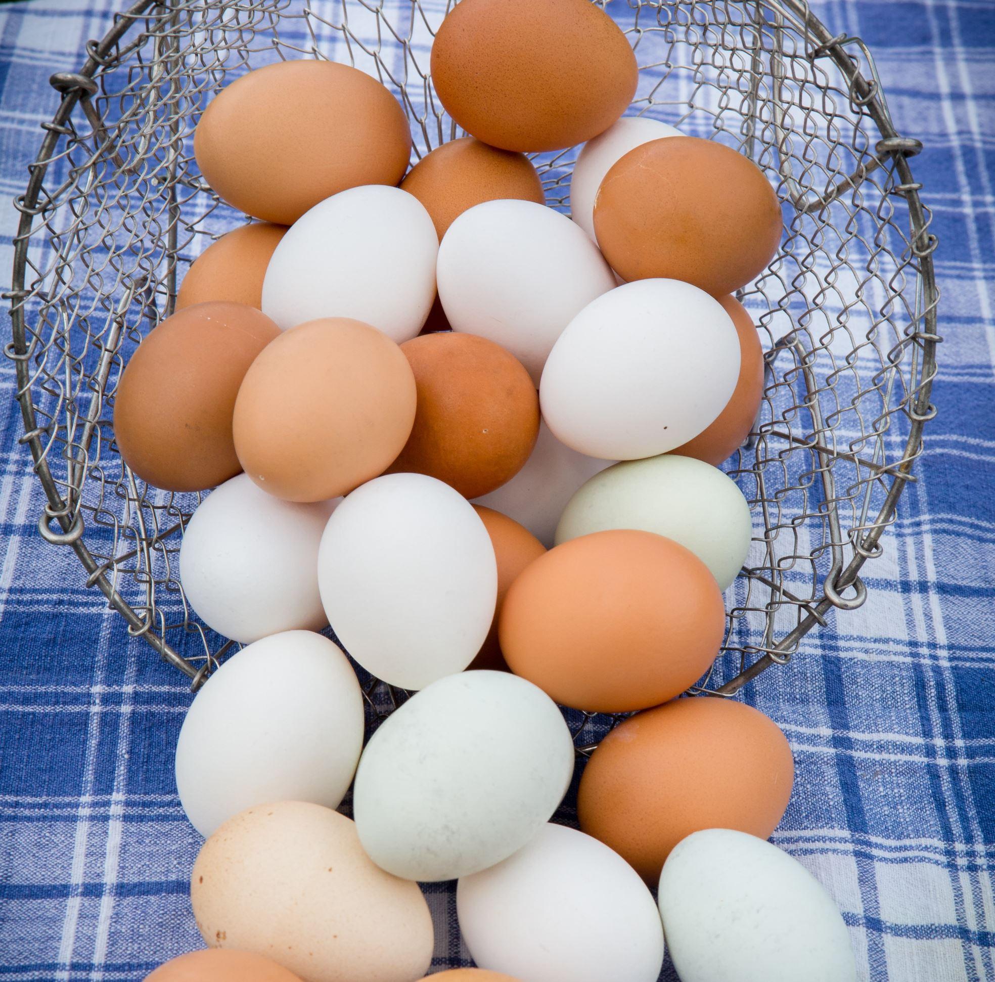 Egg Spring CSA (April - June) *PICK UP ONLY*