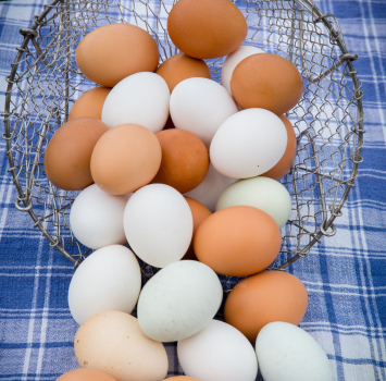 Egg Spring CSA (April - June) *PICK UP ONLY*