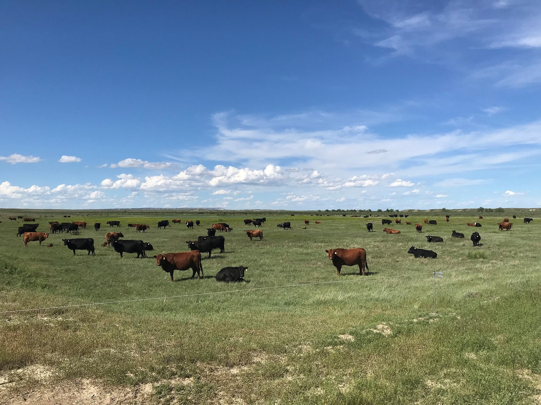Ranch-cows2.jpg