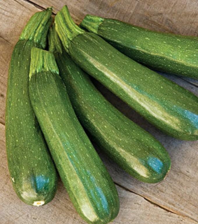 BBF Zucchini