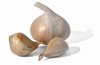 SGP Elephant Garlic