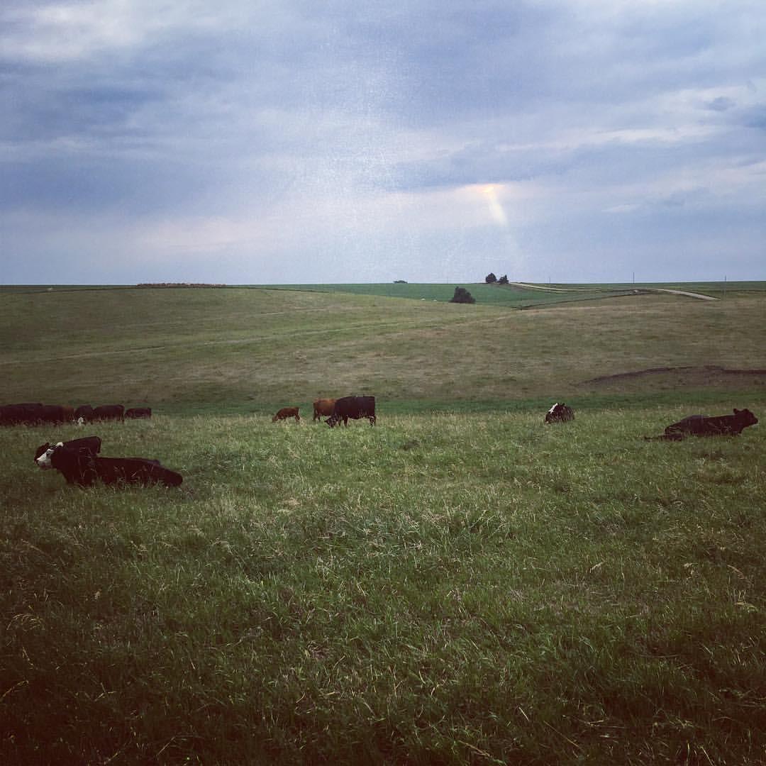 cattleinpasture.jpg