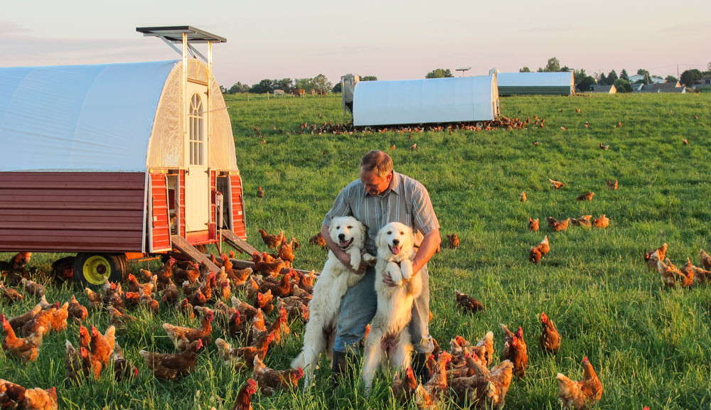 Chicken-Egg-Layers,-Gaurd-Dogs,-and-Happy-Farmer.jpg