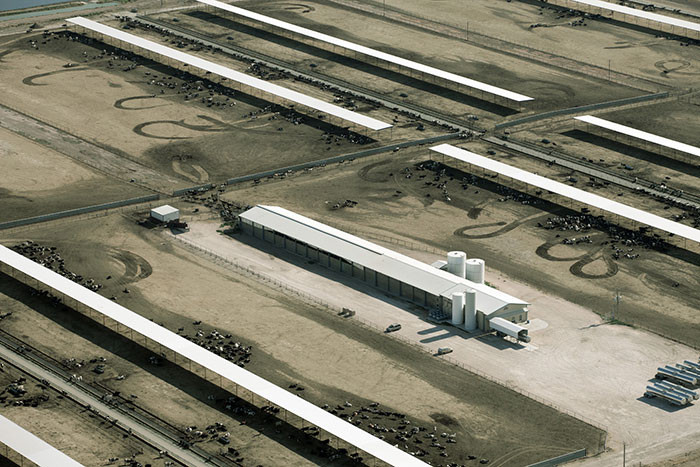 An-Aurora-feedlot---one-of-the-six-industrial-scale-certified-organic-dairy-farms-in-Texas-creating-more-milk-than-over-450-authentic-organic-farms-in-Wisconsin.jpg