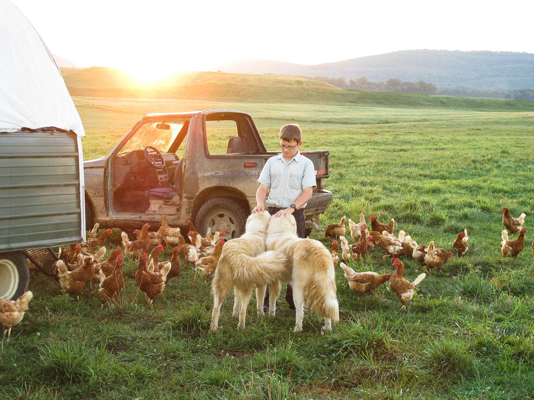 Laying-Hens-&-Guard-Dogs.jpg