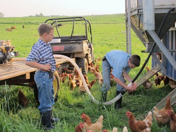 Hooking-up-the-chicken-water-tank-hose.jpg