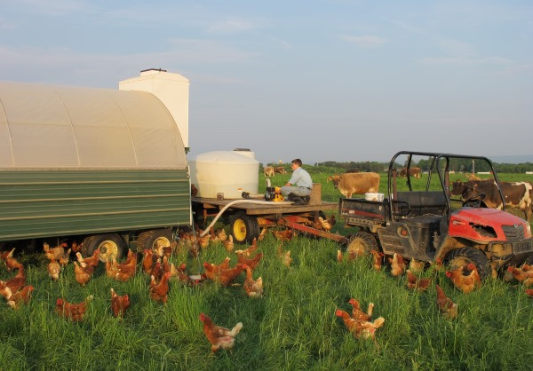 Filling-up-the-chicken-water-tank.jpg