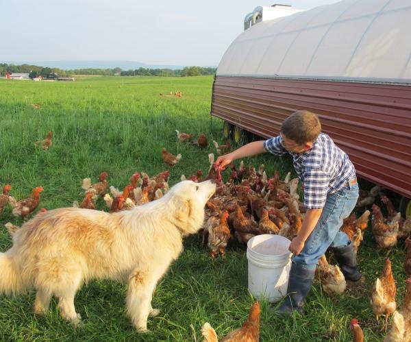 Feeding-the-guard-dogs-their-meat.jpg