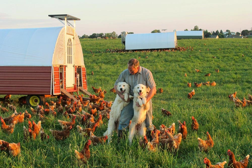 Farmer Edwin with Hens and Guard Dogs