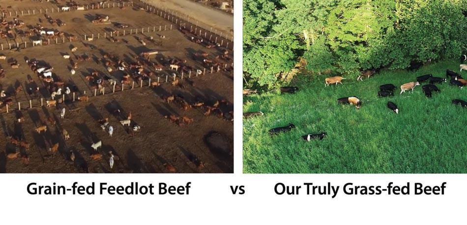 Feedlot-vs-Truly-Grass-fed-Beef-2.jpg
