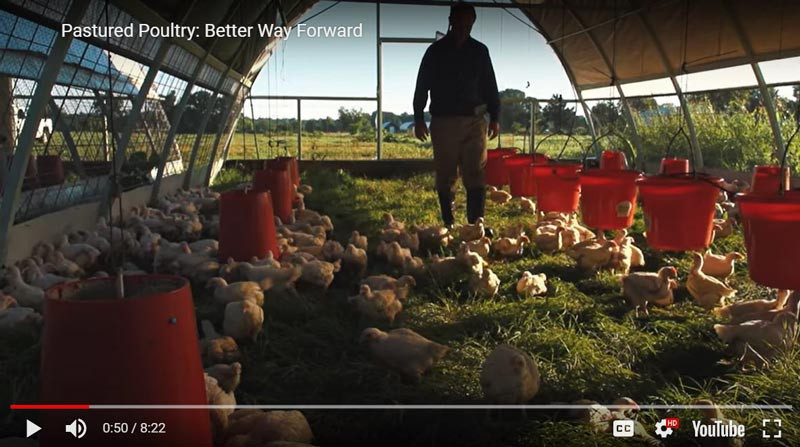 VIDEO: Truly Pastured Chicken in action