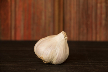 Garlic Bulb (Music) - Medium